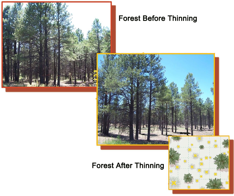 Forest Before and After