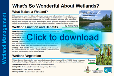 Wetlands Lesson 1