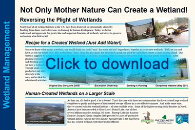 Wetlands Lesson 2