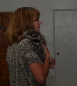 Susan Taggart with baby rescued Raccoon at Wildlife Rehab Fundrasing Dinner