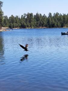 Woods Canyon Lake. We were out fishing and this eagle flew by and grabbed a fish!