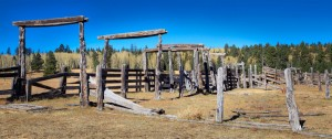 This photo was taken at the Apache Rail road cattle holding area just off of HWY 260 by the Sky area in the White Mountains.