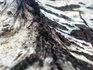 Taken outside our cabin in Pinetop-Lakeside on the bark of a birch tree.